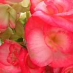 Flores do Mosteiro da Luz